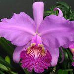 Орхидеи под заказ