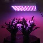 Фитолампы (подсветка для растений)