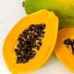 Carica papaya Tropical Dwarf