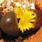 Tanquana hilmari