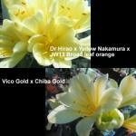 Clivia Hirao Nakamura VC